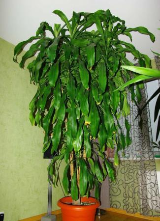 Продам продаю комнатные растения