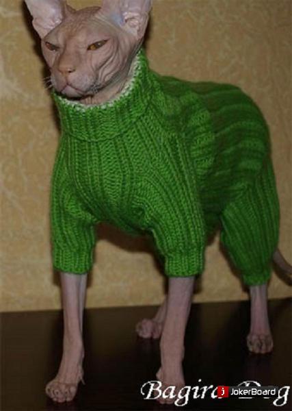 вязаная одежда для кошек москва