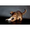 Абиссинские котята из питомника