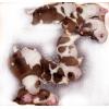 Английского бульдога щенков