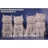 Британские котята из питомника SilverySnow