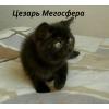 Черный плюшевый котик