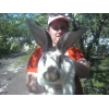 Кроли великаны мясных пород