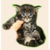 Котята породы Мейн кун!  Мэйн кун нежный гигант в Вашем доме! ! !