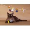 Бурманские котята всех окрасов
