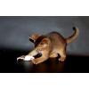 Абиссинские котята из питомника.