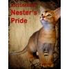 Абиссинские котята от чемпионов