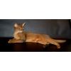 Абиссинский кот для вязки.  импорт США.