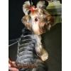 Акция:  скидка на стрижку собак старше 8 лет