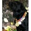 Чёрные  щенки лабрадора ретривера питомник РКФ