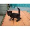 Чёрный котёнок ищет себе семью кошколюбов