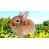 Декоративные кролики,  цена зависит от породы,  после ветосмотра