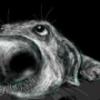 Дрессировка собак в Москве на все 100 %
