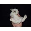 Карликовый Кролик Рекс,  купить его можно здесь.