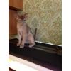 Клубные котята