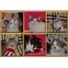 Кошки в хорошие руки. Домашние кошечки ищут Дом и Хозяина!