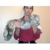 Котята Мейн Кун 4 мес