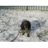 Квартирная передержка собак в Москве