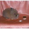 Львиноголовые крольчата - питомник