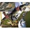 Нильский Крокодил – ручные детеныши
