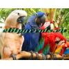 Попугаи -  ручные птенцы из питомников Европы и США