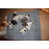 Продам 2х очаровательных щенков-алабаев 25000 руб.
