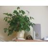 Продам растения дешево