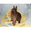 Продаются карликовые кролики разных пород