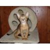 Продажа абиссинских котят.
