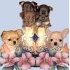 Русский Той-терьер и Чихуахуа щенки,  выбор щенков на любой вкус!