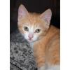 Рыжий котенок-девочка Пеппи – настоящий солнечный зайчик в дар!