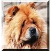 Собаки,  щенки даром. Абсолютно домашние животные в приюте