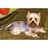 Стрижка или тримминг Вашей собаки