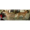Стрижка собак и кошек в зоосалоне Пушистый гном и с выездом на дом.