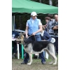 Восточноевропейской овчарки щенки