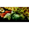 Зеленоглазая серебристая красавица