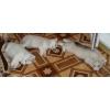 Породные щенки Сибирского Хаски