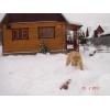 Продается щенок чистокровного алабая в Железнодорожном