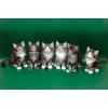 Продаются норвежские лесные котята