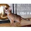 Самый ласковый котенок на свете