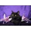 Благородный пушистый котенок