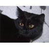 Чёрная кошечка Пантера в заботливые руки!