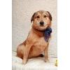 Деби - спокойная собака с мудрыми глазами.