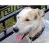 Эрик - 2-х летний пес - компаньон ищет дом.