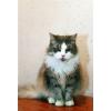 Это славный кот Дымок.   Кто бы котику помог?