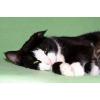 Ищет лучший дом кошка Маруся
