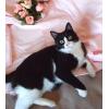 Очаровательная Маркиза согласна стать вашей кошкой!
