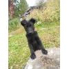 Отдам чудесных щенков:   Бонни и Клайда