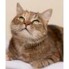 Отдам красивую ласковую кошку