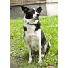 Отличная собака Грета ищет дом и хозяина